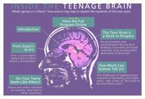 Головной мозг: ребенок и взрослый